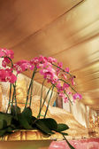 Orchids flower in Thailand temple — Foto Stock