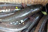 Fresh Catfish on the market — Stock Photo