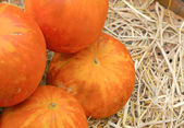 Fresh bright yellow pumpkins on the market  — Стоковое фото