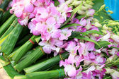 Pink orchids tied together at the market. — Stockfoto