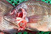 Peixe fresco no mercado. — Foto Stock