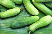 Fresh cucumber in the market — Stock Photo