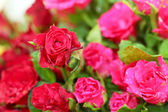 Крупным планом красная роза — Стоковое фото