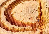 Favo de mel no galho. — Foto Stock
