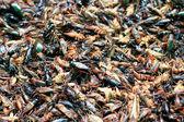 заделывают жареных насекомых — Стоковое фото