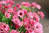 Bela artificial das flores — Fotografia Stock