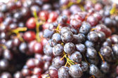 Fresh grapes on the market — Stock Photo
