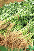 Water spinach as animal feed — Stock Photo