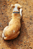 Dog lying crouched on the ground — Stock Photo