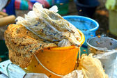 Honeycomb on the plastic tank — Stock Photo
