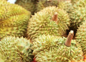 Durian fruit in the market — Stock Photo