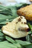 Close up of fresh honey in honeycomb — Stock Photo