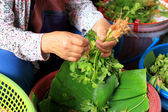 Women sell coriander fresh vegetables — Stock Photo