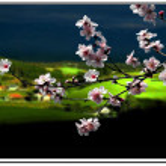 Spring — Stock Photo #13780749