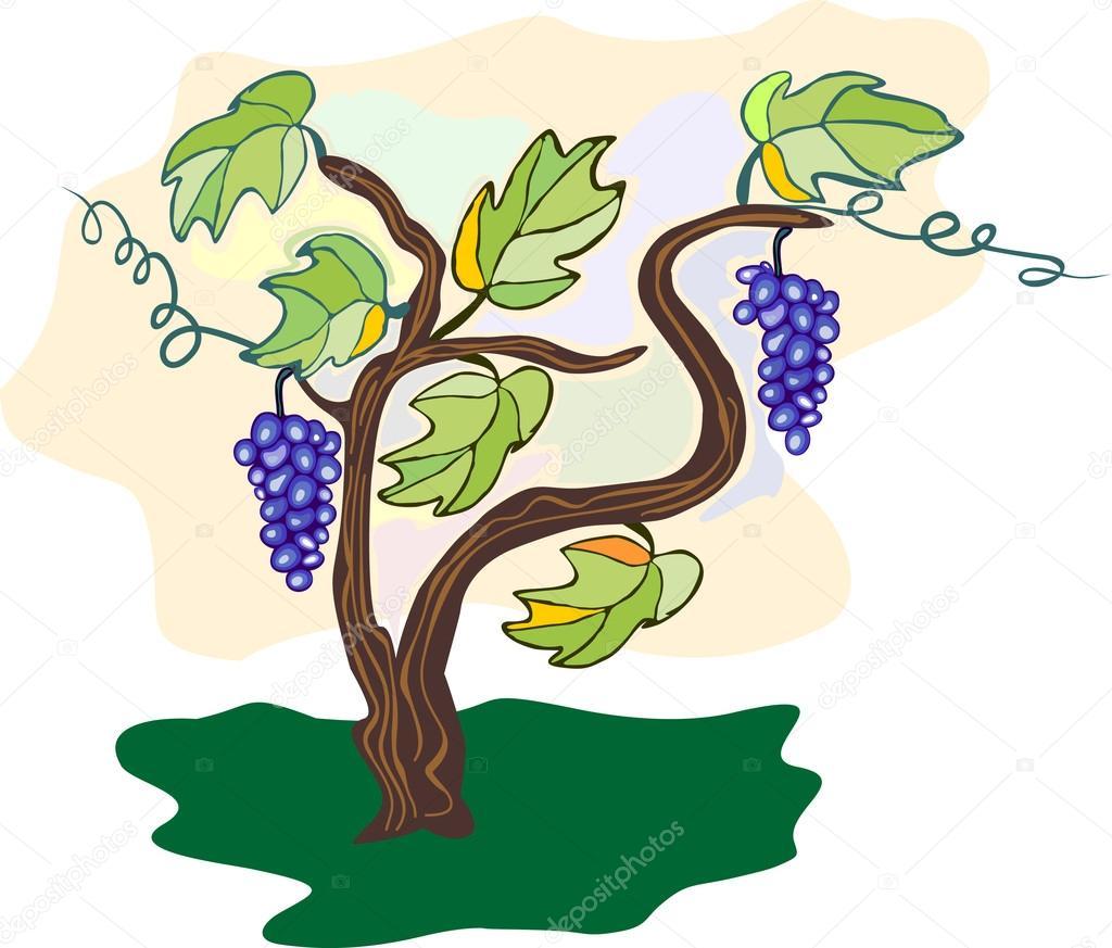 Виноградное дерево рисунки