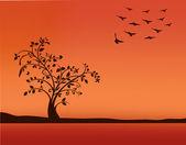 Tree in sunset — Stock Vector