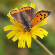 Butterfly on a buttercup — Stock fotografie