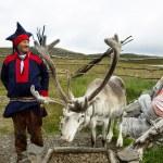 Reindeer in Honningsvag, Norway. — Stock Photo #22104863