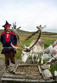 Rendieren in vanhonningsvag, noorwegen. — Stockfoto