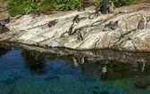 Penguins in Alesund aquarium, Norway — Stock Photo