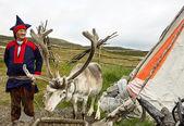 鹿和驯鹿饲养员 — 图库照片