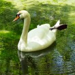 Swan with reflection — Stock Photo