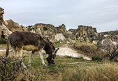 Donkey in the mountains, Turkey — Stock Photo