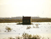 Landscape Tiengemeten Holland — Stock Photo