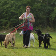 Womwalks with four dogs on green grass — Stock Photo #35539577