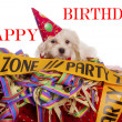 Maltese dog with party hat with birthday congratulations — Stock Photo #35539605