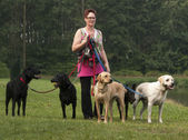 Woman walks with four dogs on green grass — Stock Photo