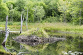 Acadia National Park - Beaver Lodge — Stock Photo
