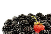 Blackberries & Raspberry — Stock Photo