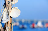 Shells hanging charms without written — Foto Stock