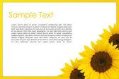 Sun flower greeting card — Stock Photo