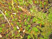 Forest floor — Stok fotoğraf