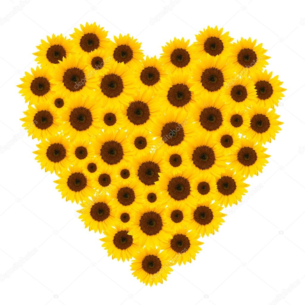Isolated sunflower blossoms arranged as heart — Stock Photo #13990966