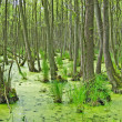 Swamp — Stock Photo