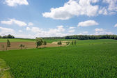Field in the Kraichgau — Stock Photo