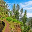 Stock Photo: Along Levada, Madeira