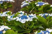 красивый цветок — Стоковое фото