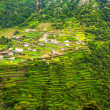 Terraced hills, Madeira — Stock Photo