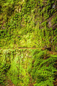 Moss wall with fern nearby — Stock Photo