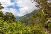 Zelená příroda madeira — Stock fotografie