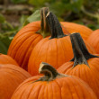 Stock Photo: Pumpkin Patch with Pumpkins