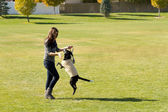 Girl Playing with Dog in a Park — Stock Photo