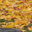 Autumn Leaves — Stock Photo #33737327