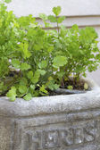 Herb Planter — Stock Photo