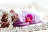 Parel ketting en orchid — Stockfoto