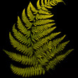 Fern's leave isolated — Stock Photo #13835817